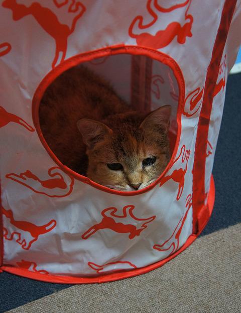 赤テント2