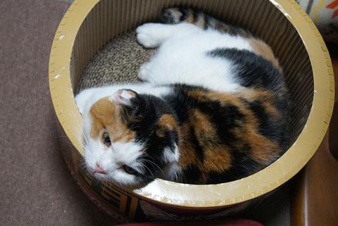 猫ベッド19