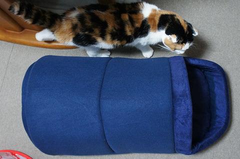 ベッドの大きさ
