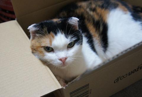 箱入り娘3