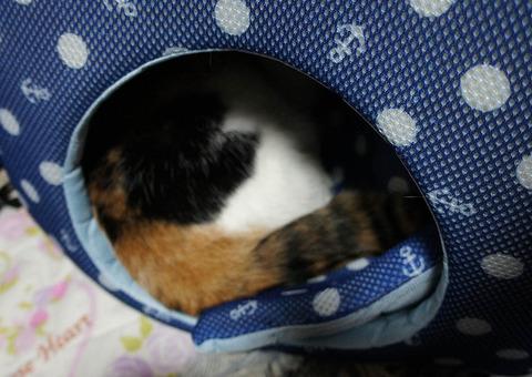 猫ベッドに11