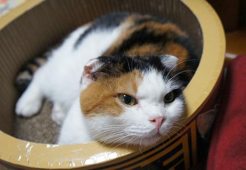 猫ベッド21