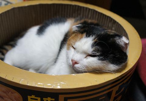猫ベッド22