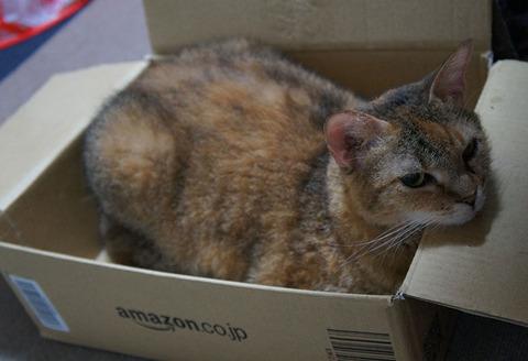 お気に入りの箱2