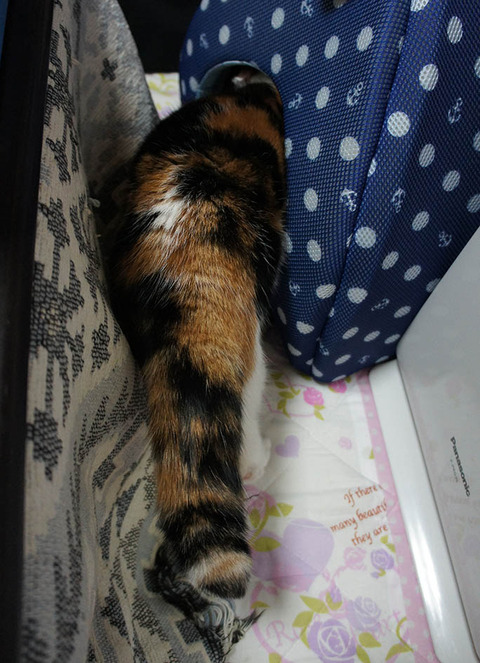 猫ベッドに