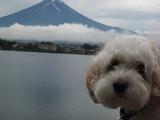 モコ&富士