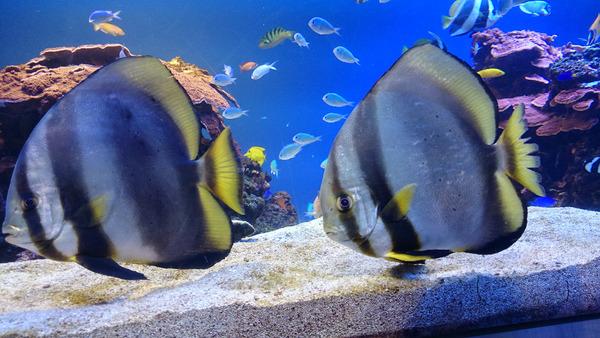 DSC_魚2匹