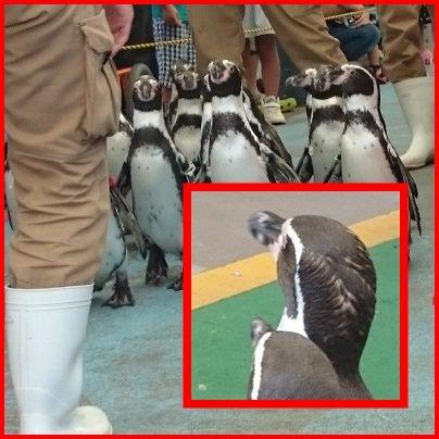 pageペンギン枠付き2