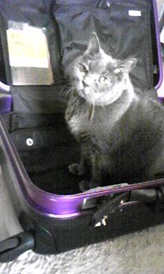 王ちゃん、トランクに~