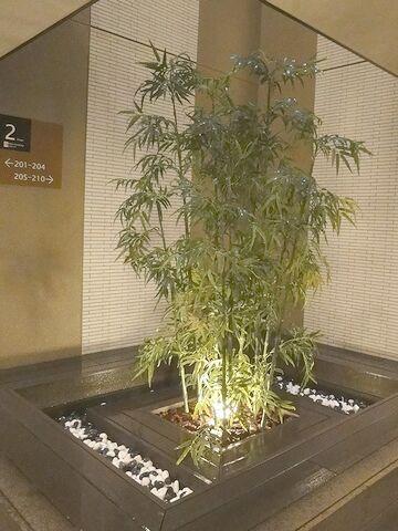 2階フロアの植栽