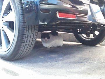 とにかく、車の下に入りたがります