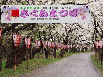 """ゴールデンウィークころ、『芦野公園』では""""桜まつり""""が開かれます"""