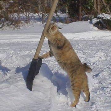 正月早々雪かきなどという仕儀にも相成らん