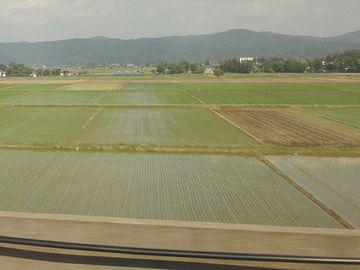 新潟平野の田んぼです