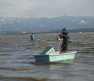 十三湖のしじみ漁。こんな人生もありかなって思います。
