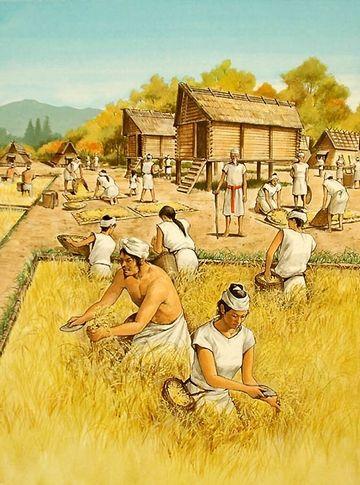 弥生時代になりって、農耕が始まる
