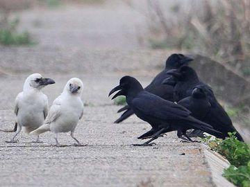 早く白黒つけましょ