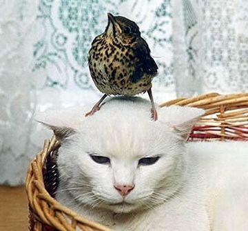 鳥のドヤ顔は珍しい