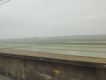 稲の緑が確認できます
