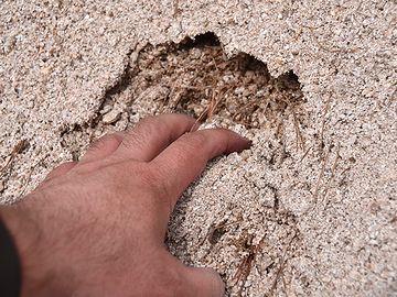 花崗岩が風化してボロボロになったもの