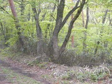 荒廃した雑木林なら、隠れ場所にも困りません