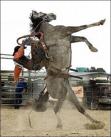 突然馬が、竿立ちになって……