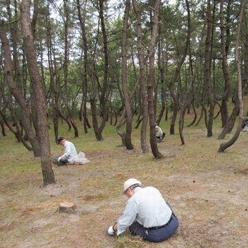 松林の林床が綺麗に保たれてます
