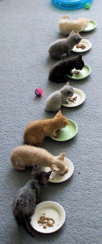 しばし、食事に集中させていただきます