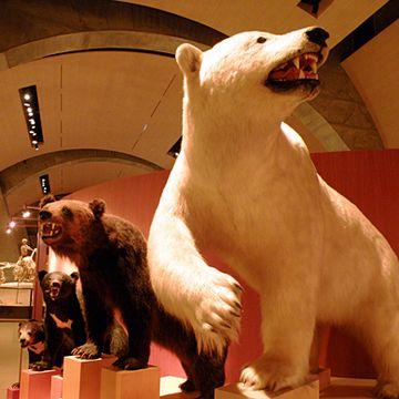 北方の動物の体が大きい訳を説明するために、サイコロを例にしたわけ