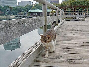 浜離宮の猫は、複数匹いる
