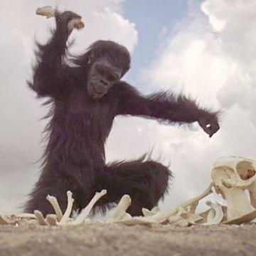 ただの猿ではないな