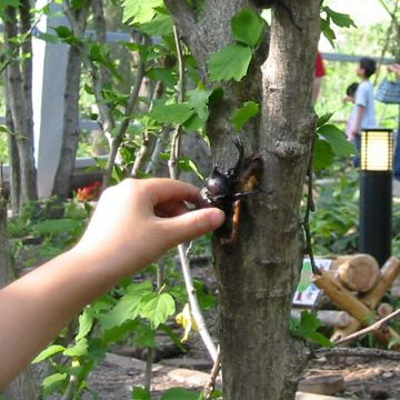 夏場は、観察園もオープンして、実際の虫にも触れます