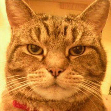 真面目ネコ