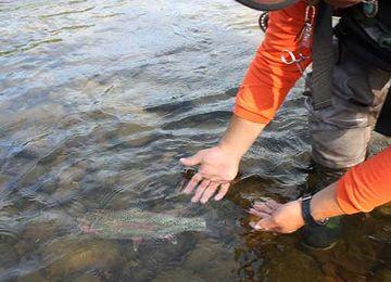 リリースってのは、釣った魚を、水に帰しちゃうことでしょ?