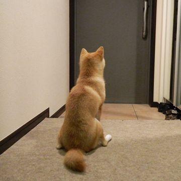 ご主人の帰りを待つワンコ。こんな待たれ方をしたら、帰らずにはおれませんね。
