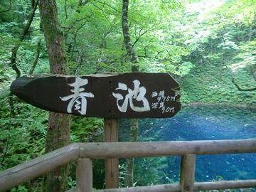 『青池』は、その十二湖のうちのひとつなんです