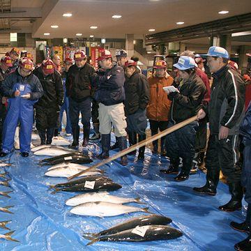 魚市場みたいですね