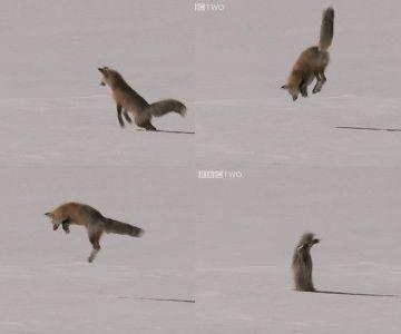 そのため、速く走ったり、ジャンプしたりする必要がある