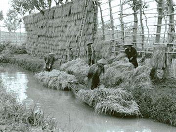 亀田郷一帯に、水路が網の目のように広がってました