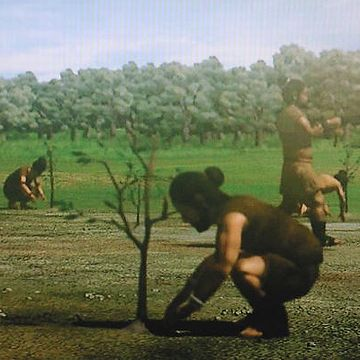 何世代か後の子孫のために木を育てるって考え方も、持ってたはず
