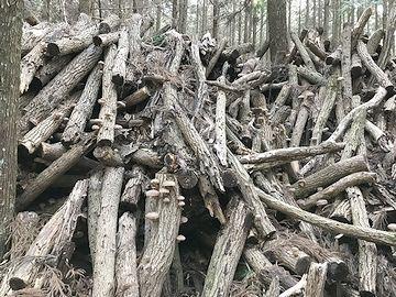 古くなった椎茸のホダ木は、林の中に積み重ねられます