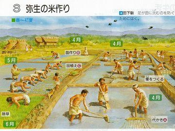 稲作は弥生時代に始まるとされていました