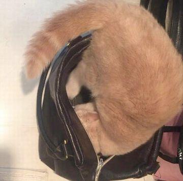 ときどき、バッグの中を覗いてください