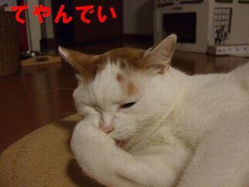 猫舌の江戸っ子は、どうしてたんでしょうか?