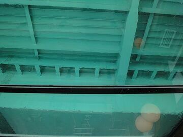 隅田川大を潜る