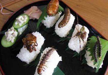 虫寿司だそうです