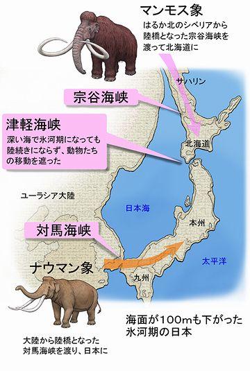 津軽海峡を境に、北海道と本州の生物相が異なる