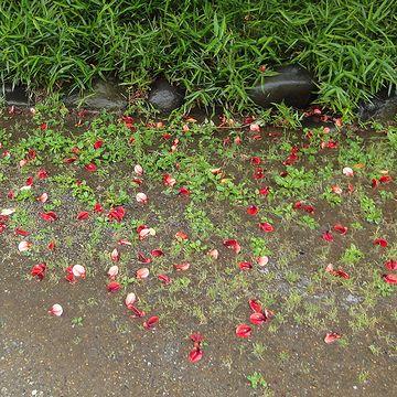 根元には、花が散ってました