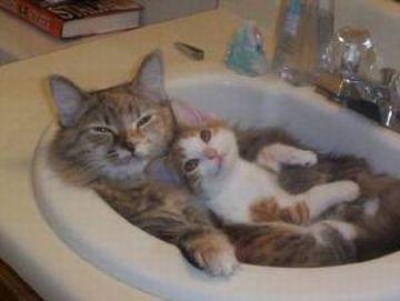 なんであんたを、お風呂に入れなきゃならんの