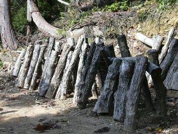 でも、人間にとっては、椎茸栽培のホダ木になるくらいで……